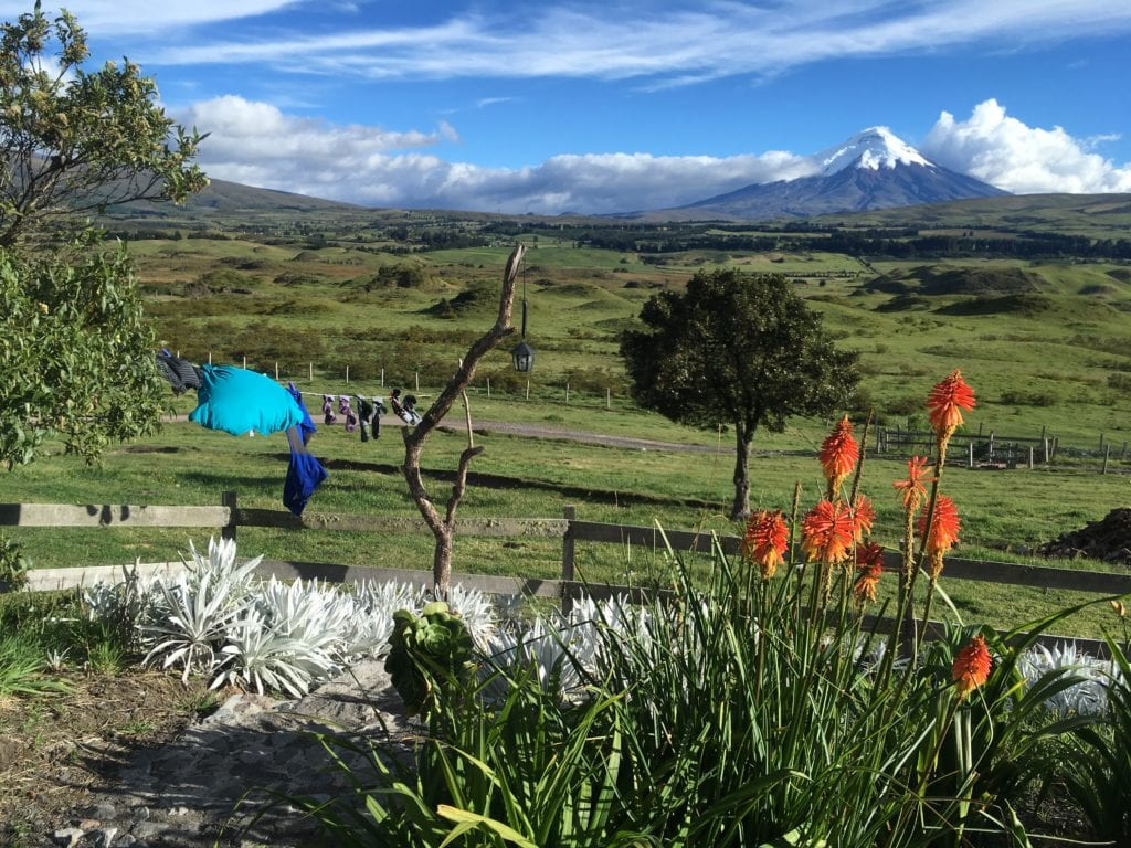 View of Cotopaxi volcano with orange flowers in the foreground and a lot of green area.