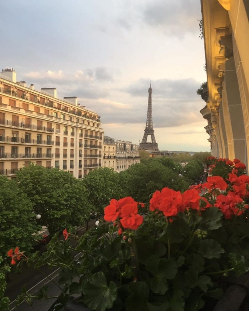 Red flowered bushes at the Athenee Hotel in Paris, the Eiffel Tower in the background