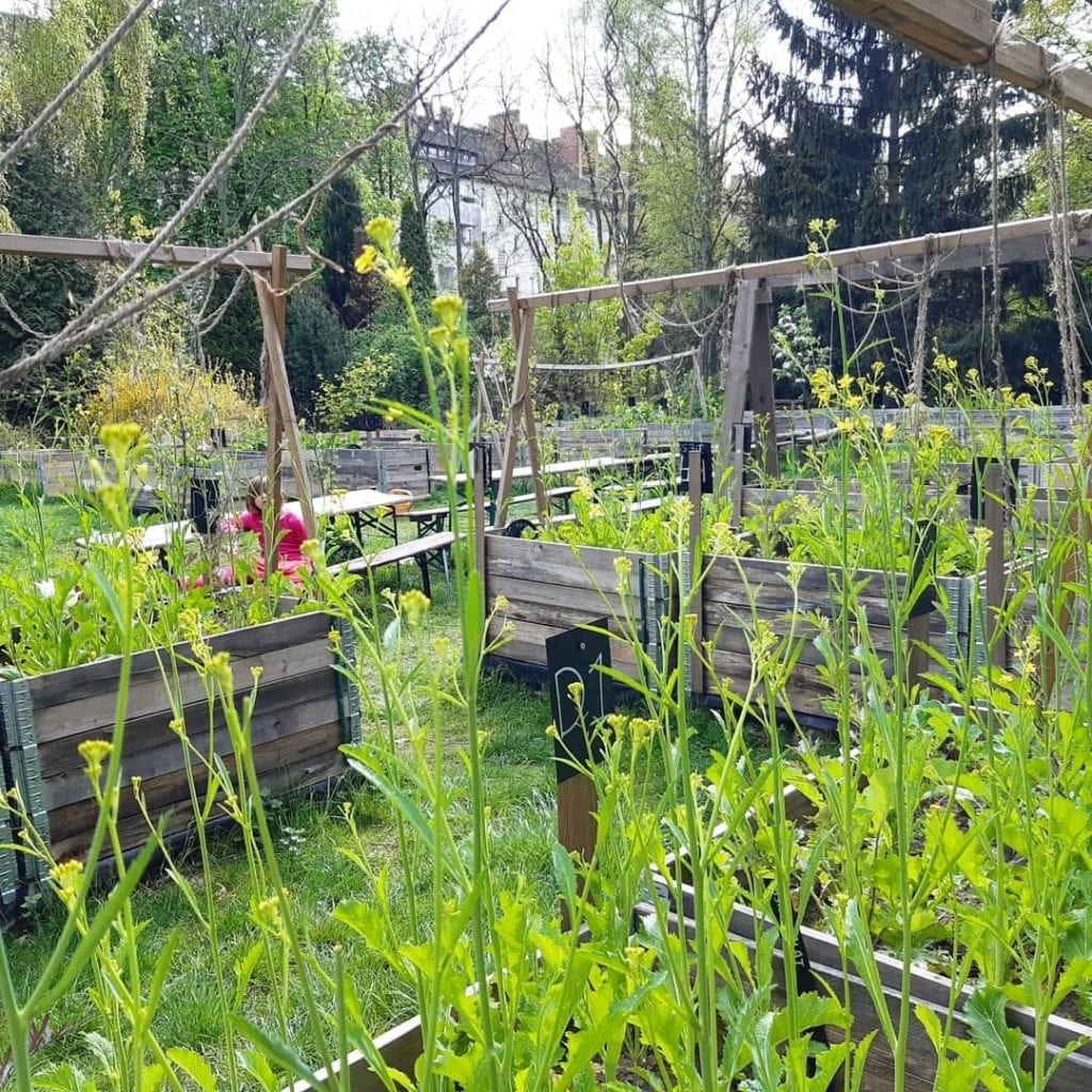 Community urban garden in Berlin, Germany with different raised beds growing plants and vegetables.