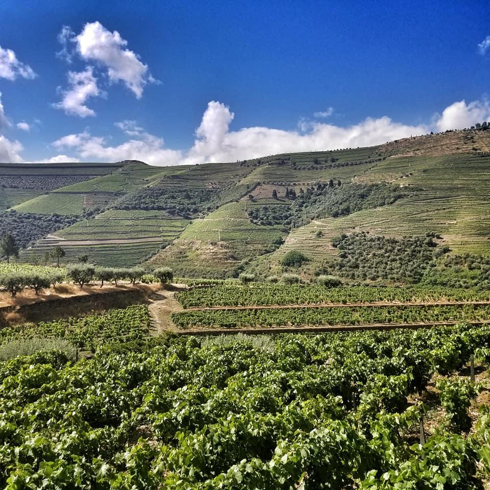 Rolling hills of Douro Valley Vineyards