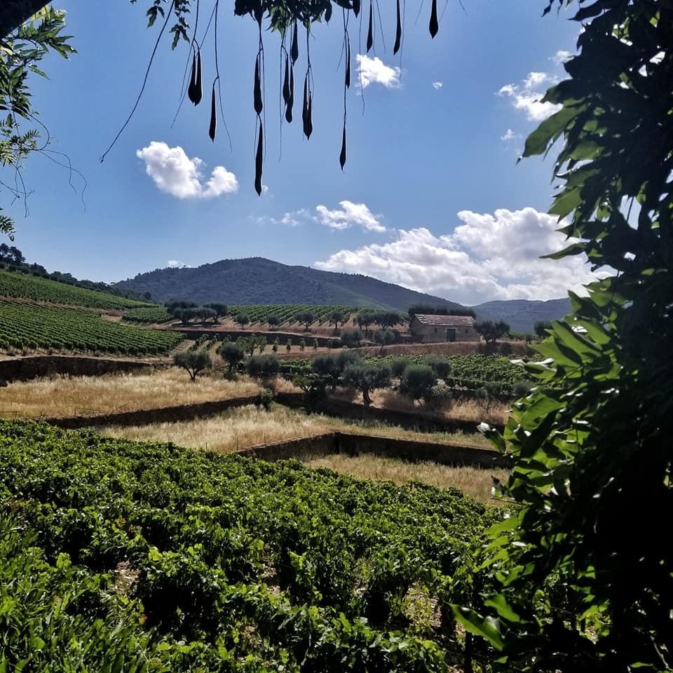 View of vineyards through terrace in Douro River Valley, Portugal