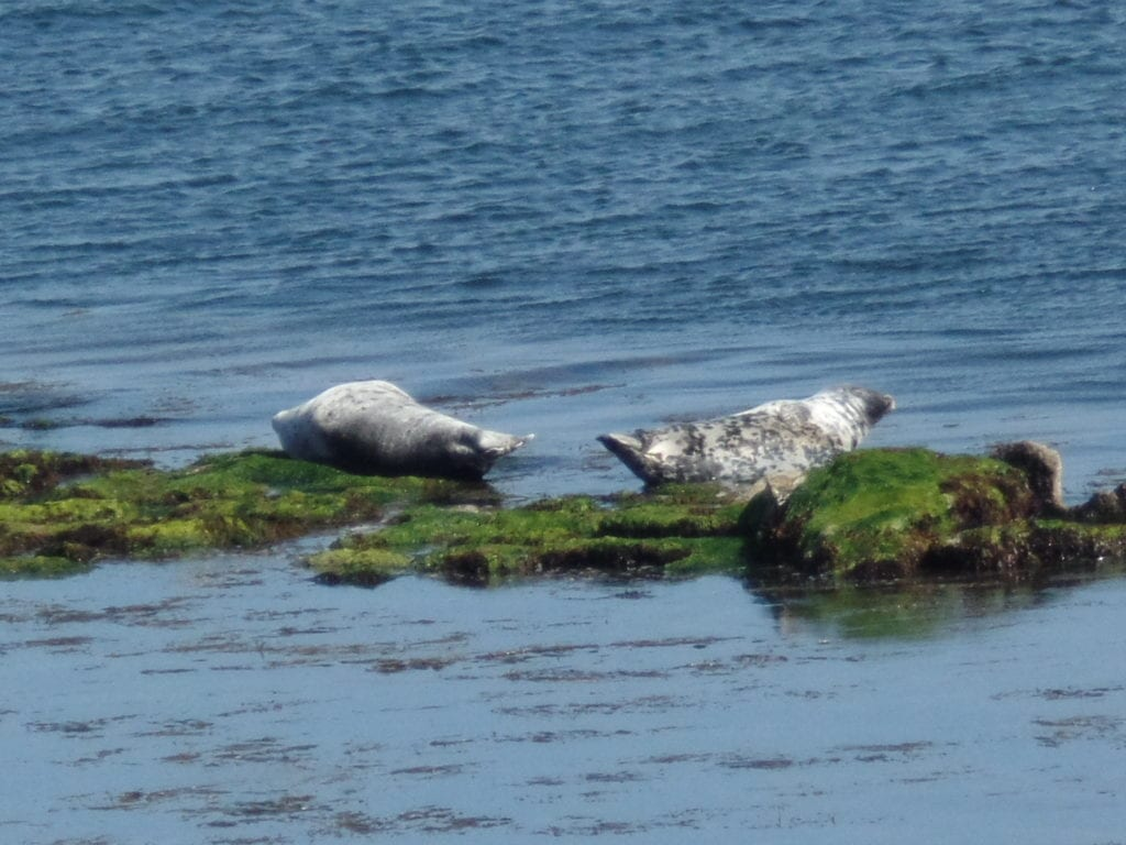 Two seals on a rock off the coast of Inis Mor in the Aran Islands, Ireland.