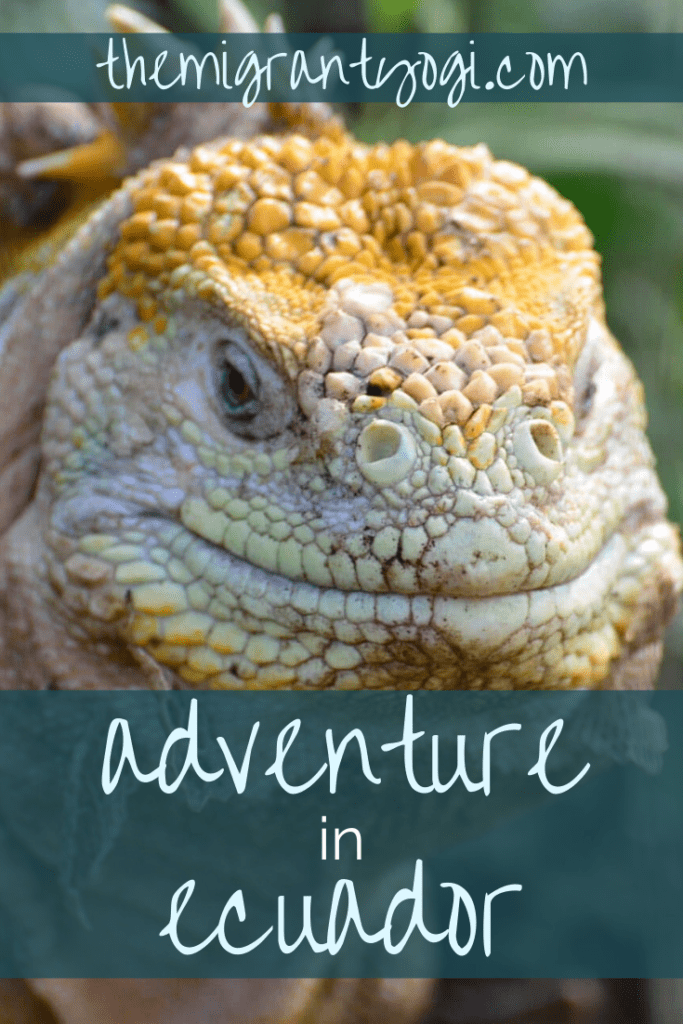 Pinterest graphic - Iguana head up-close and text 'Adventure in Ecuador'