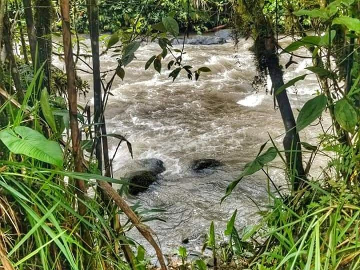 Rio Mindo flowing through some trees in the cloud forest of Mindo.