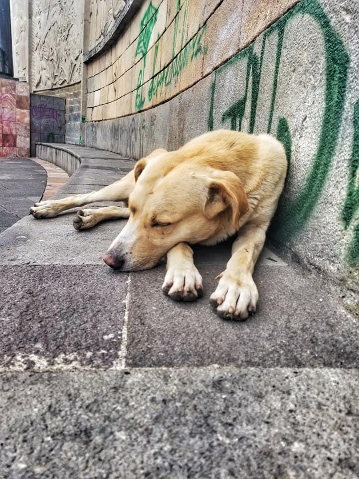 Street dog in Cuenca, Ecuador sleeping on a bench