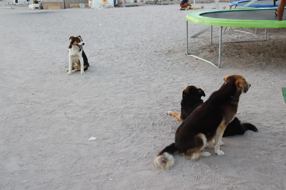 Street dogs next to a trampoline in Vama Veche, Romania