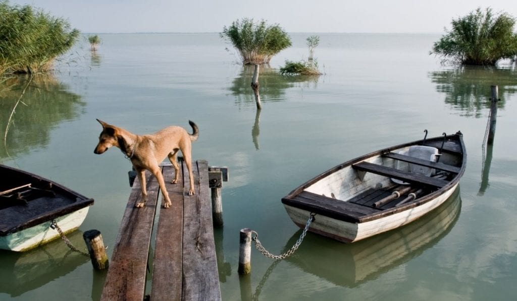 Two small row boats tied to a tiny dock with a dog on it on Lake Balaton, Hungary, a great and easy day trip from Bratislava.