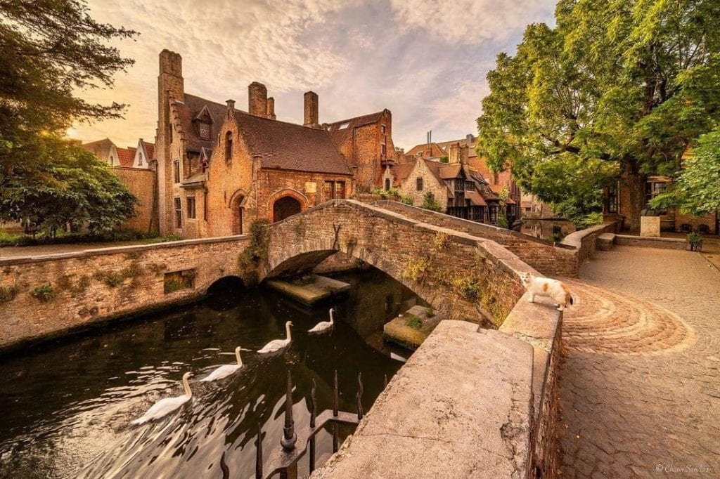 Bridge in Bruges, Belgium with a row of swans swimming underneath.