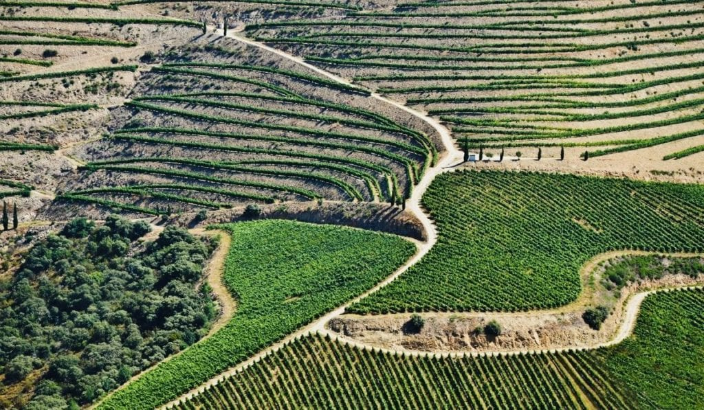 Tiered, hilly vineyards of the Douro River Valley, a convenient day trip from Porto, Portugal.