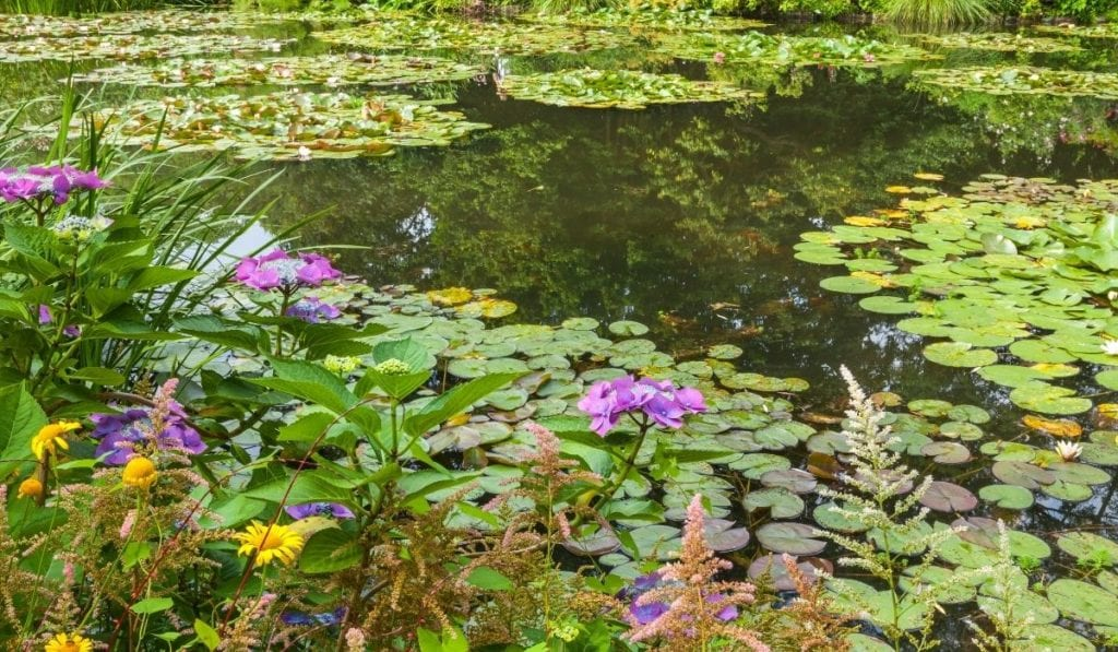 One of the best day trip from Paris - Giverny, lilypad covered pond where Monet got his inspiration.
