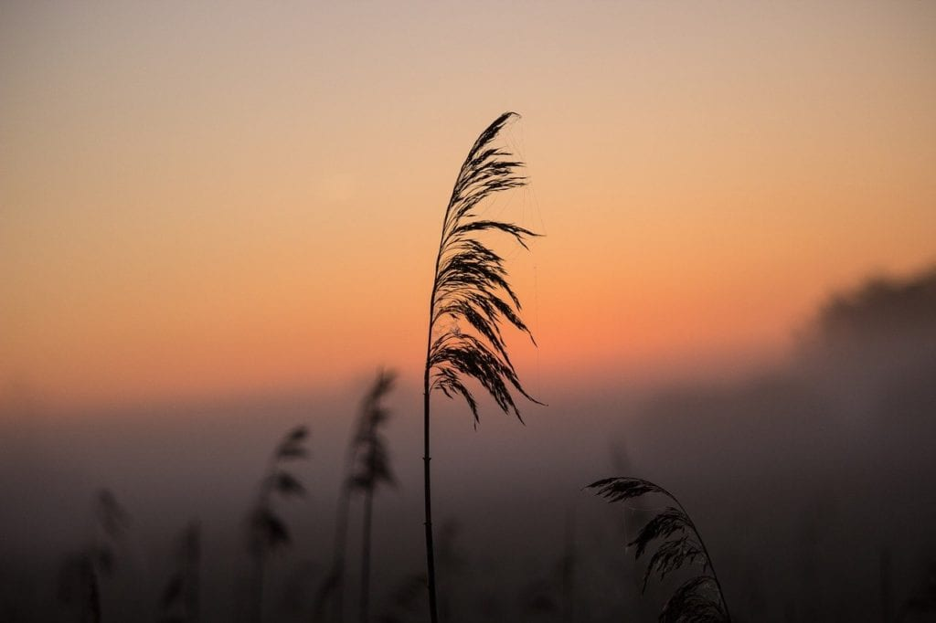 Silhouette of beach reeds during sunrise