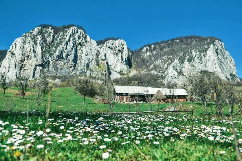 Village hut in Transylvania, Romania beneath mountains with white wildflowers in the foreground.