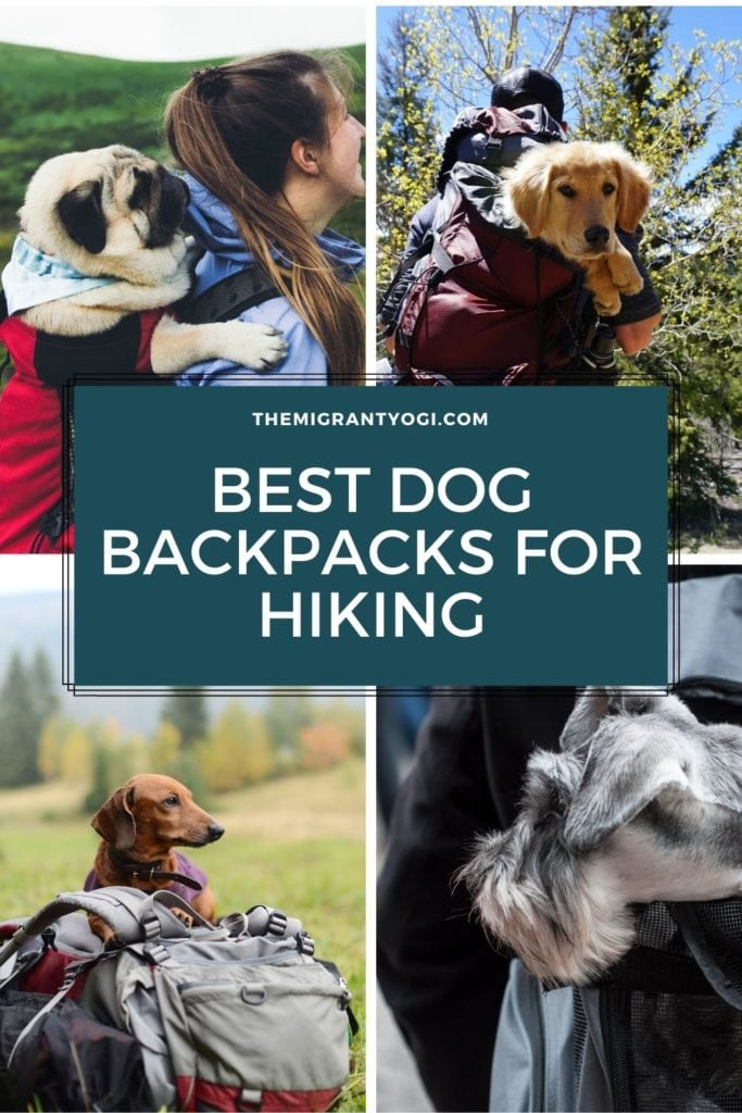Pinterest graphic - Best Dog Backpacks for Hiking with 4 images of dogs in backpacks.