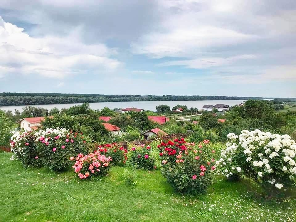 Rose bushes and gardens overlooking the Danube River at Casa Lac de Verde, Romania