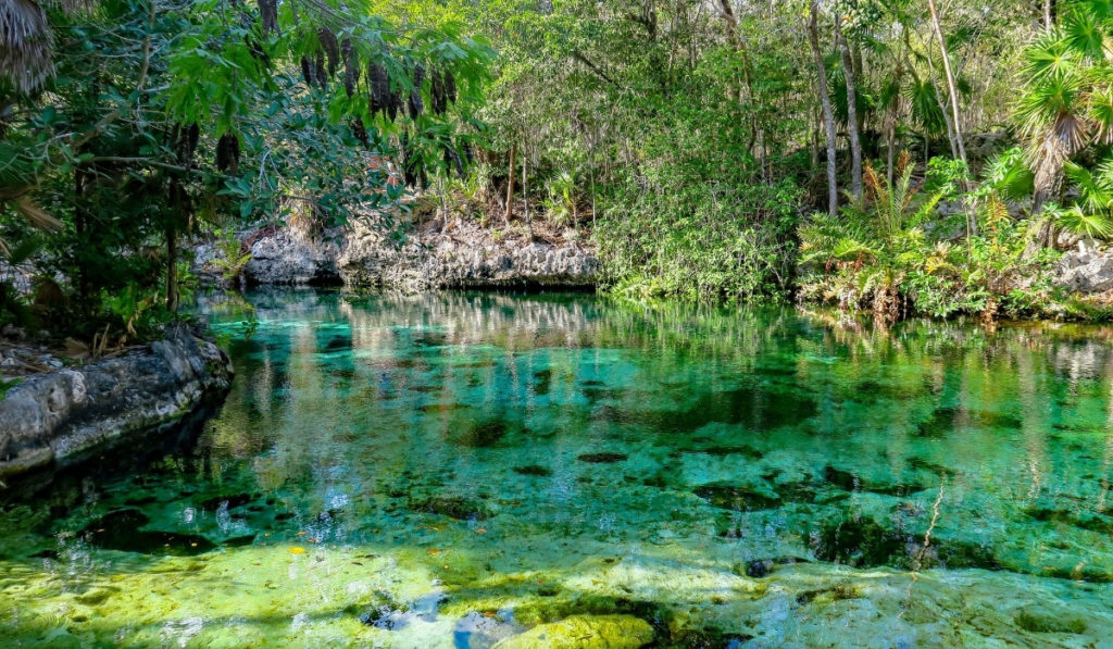 Crystal clear waters of Jardin del Eden cenote, one of Riviera Maya's best cenotes.