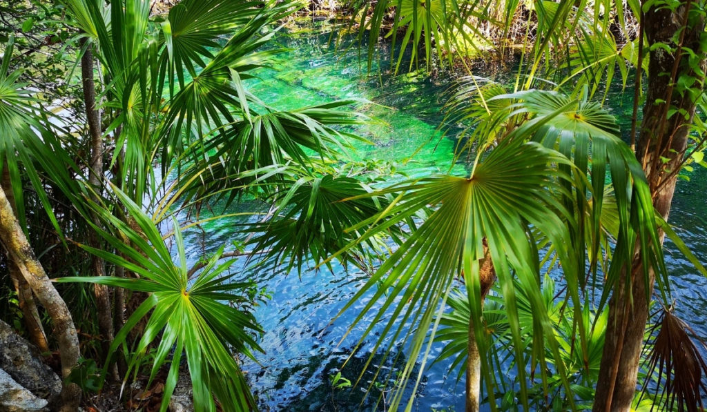 A view of secluded Escondido Cenote