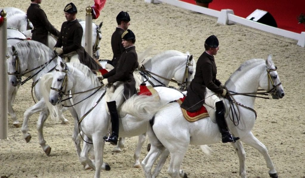 Three Lipizzanner stallions training in Vienna Austria at the Spanish Riding School during Morning Exercise.  Many onlookers are seated in the balconies at the Winter School.  Chandeliers hang from the ceiling and the entire building is in shades of white and cream.