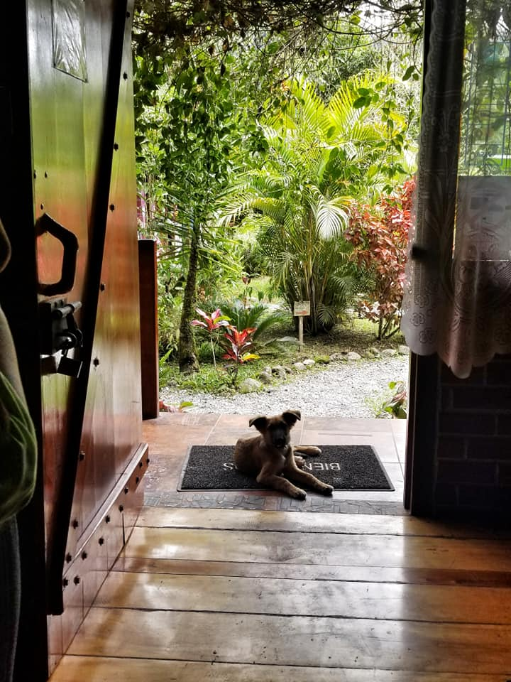 Puppy laying at the front door of the Mindo Green House Hotel with lush jungle in the background.